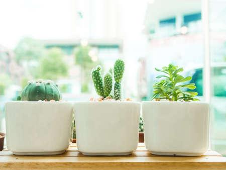 Adorable indoor cactus garden in white pot. photo