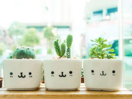 windowsill: Adorable indoor cactus garden.