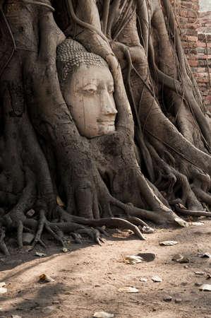 cabeza de buda: Buda cabeza en las ra�ces del �rbol en Ayutthaya, Tailandia.