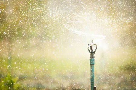 agriculture: Water sprinkler irrigation of agricultural field