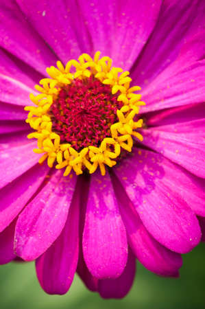 pollens: Beautiful pink flower closed up on the pollens.