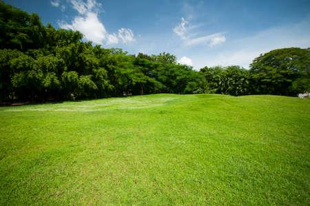Groene zomer park tuin met blauwe lucht. Stockfoto