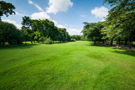 forest park: Green summer park garden with blue sky.