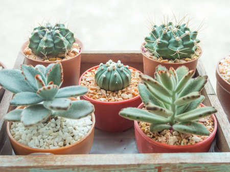 Garden Design: Garden Design With Cactus Info :: Growing Indoor