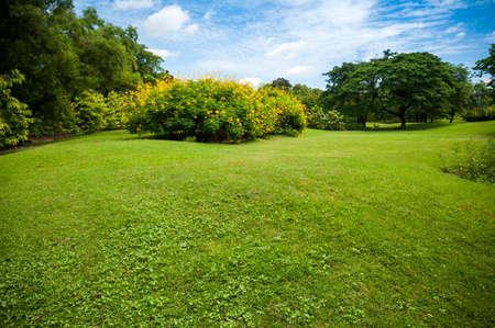 parks: Green summer park garden with blue sky.