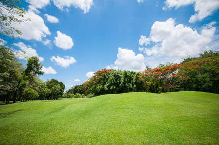 garden flower: Green summer park garden with blue sky.
