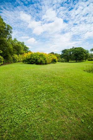 Green summer park garden with blue sky.