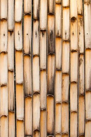 half  cut: Half cut bamboo trunk background.