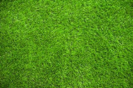 green fields: Green grass background