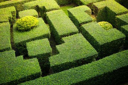 Green labryinth maze garden