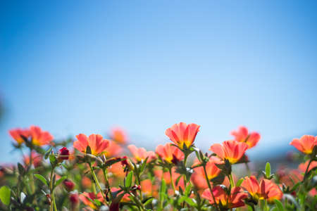 blue summer sky: Red summer flower with blue sky background Stock Photo