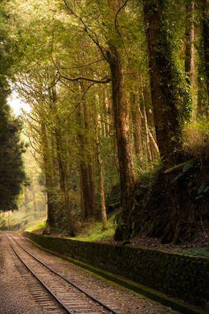 forest railroad: Railroad trough cypress pine forest with sun light