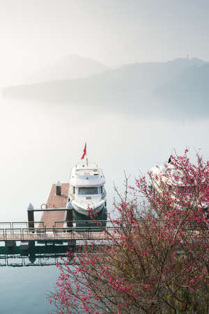 moon flower: Tourist boats docking in peachful morning with cherry blossom flower at Sun Moon Lake, Taiwan.