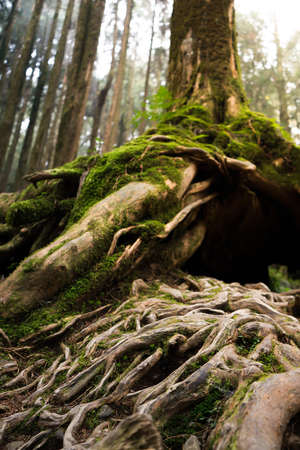 Tree roots in a green forest