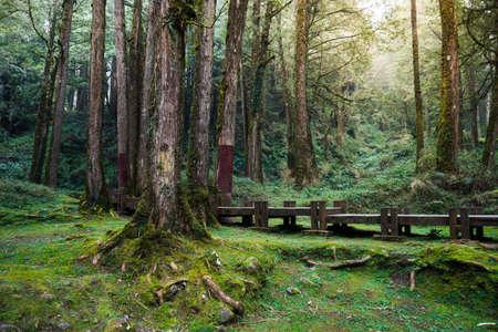 Un chemin de bois dans Alishan National Scenic Area, Province Chiayi, Taiwan Banque d'images