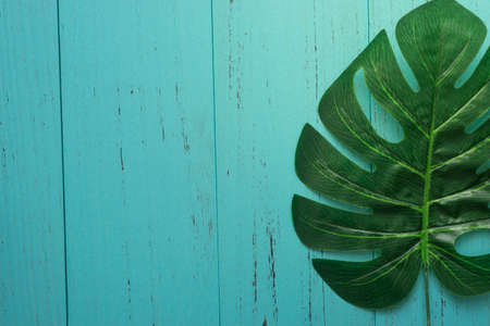 Nature green leaf with shabby wood background