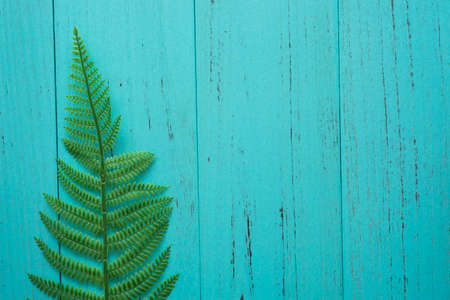 Nature green leaf with shappy wood background