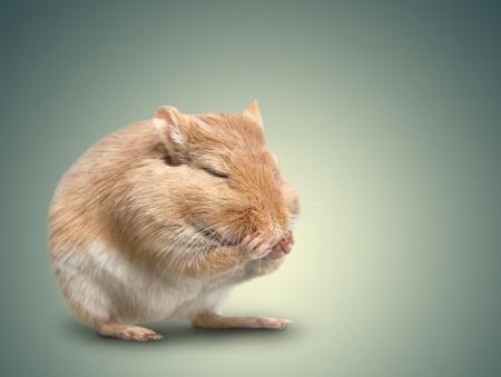 closed eyes: de muis zit op gradiëntachtergrond. gesloten ogen poten Stockfoto