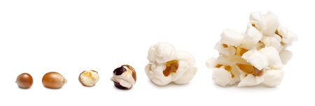 stages of preparation of popcorn. grains of corn are isolated on a white background