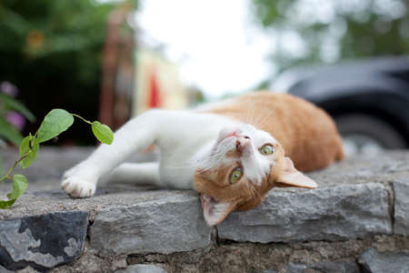 luxuriate: The red cat lies and to luxuriate on a stone  Stock Photo