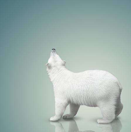 small polar bear cub on color background
