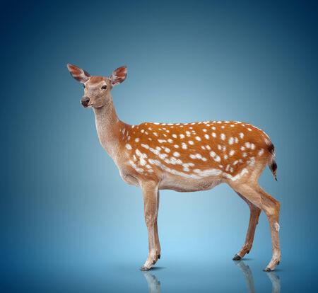 spotty: spotty deer on blue background