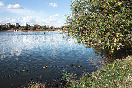 autumn trees, a river with ducks, blue sky with clouds photo