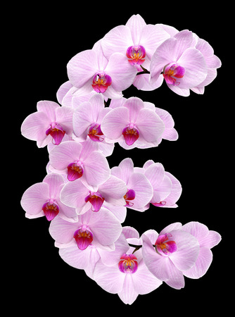 letter EUR from orchid flowers. isolated on black Stock Photo