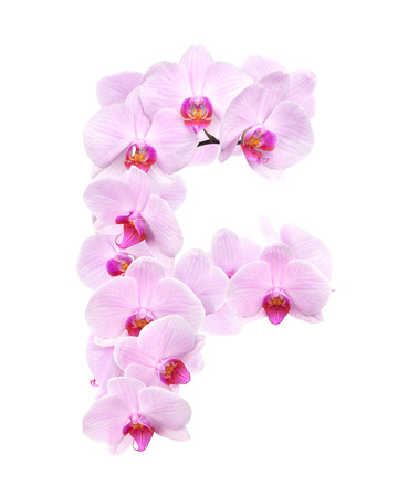 letter F from orchid flowers. isolated on white