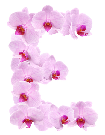 letter E from orchid flowers. isolated on white