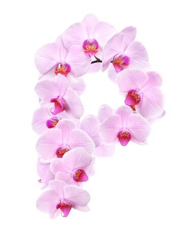harmonous: letter P from orchid flowers. isolated on white Stock Photo