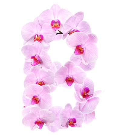 letter B from orchid flowers. isolated on white