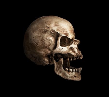 tete de mort: bouche crâne ouvert. isolé sur fond blanc, à l'ombre