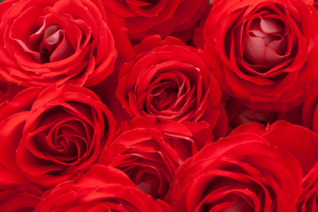 filled: a bouquet of red roses. background filled with flowers