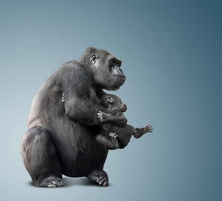 big black gorilla and her baby. blue background Foto de archivo