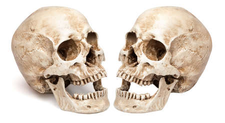 skull-open mouth. isolated on white background, with shadow Фото со стока