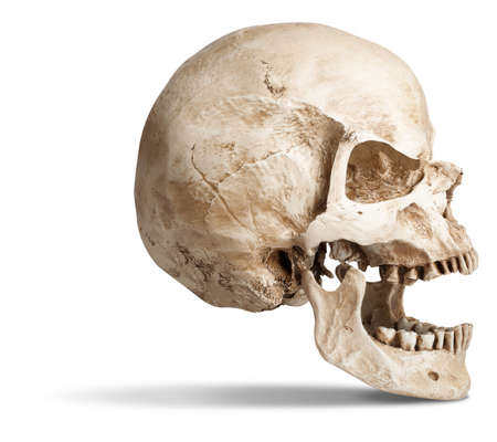skull-open mouth. isolated on white background, with shadow