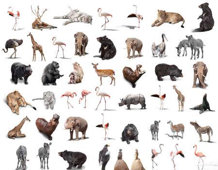 big set of wild animals isolated on white background Foto de archivo