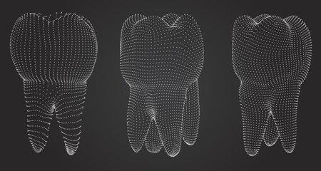 vector set of 3d teeth for dental medicine.