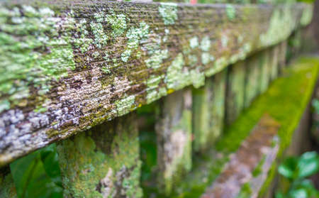 detail of moss and lichen on wooden fence photo
