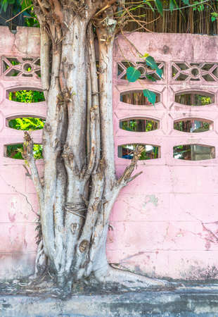 big tree growing on colorful pink brick concrete wall photo