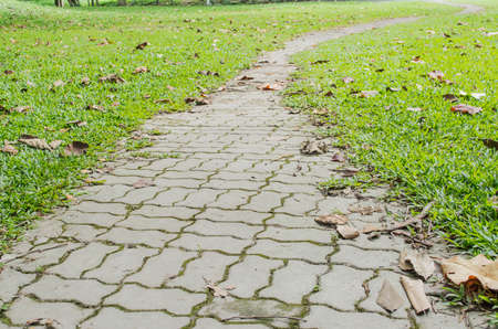forked road: concrete walk way surrounded by small grasses