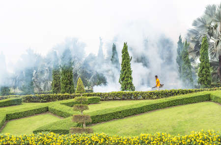 albopictus: man Fogging insecticide to kill the Aedes mosquito in the public garden Stock Photo