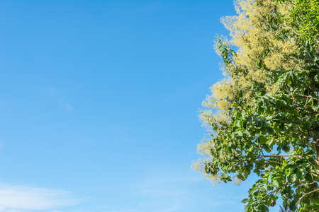 image of roll of tree and blue sky . photo