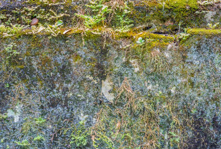 image of old mossy wall in the temple . photo
