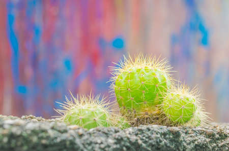 green cactus planting on wall hole . photo