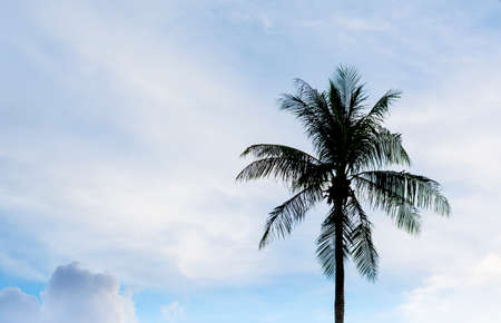 silhouette shot of coconut tree and sky in background . photo