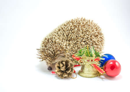 image of Hedgehog isolate on white with christmas ornaments. photo
