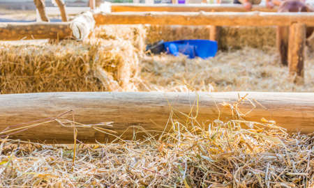 dry straw and wooden fence in farm. photo