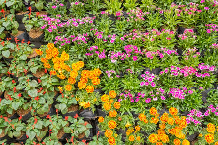 image of Various color flower background wall. photo